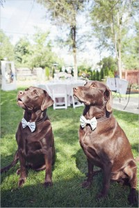 2 dogs wed
